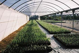 Vivero de olivos los grillos for Vivero e invernadero